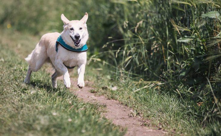 Beskytt hunden din for smitteoverføring i sommer! Image
