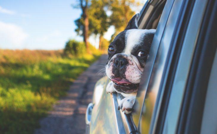 Før du tar med hunden på sommerferie! Image