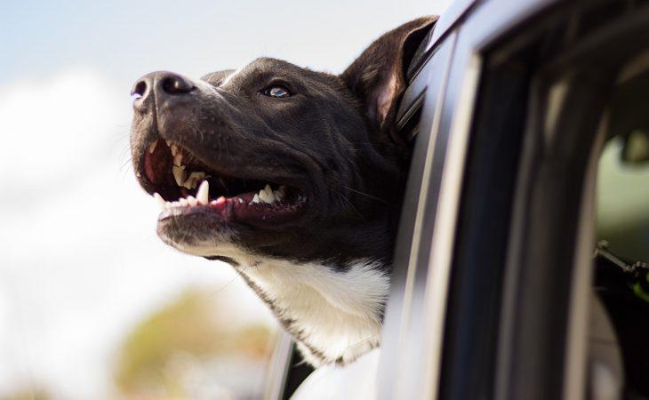 4 forskjellige ting hunden din vil elske deg for Image