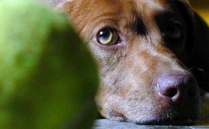 Ta vare på hunden i sommer! Image