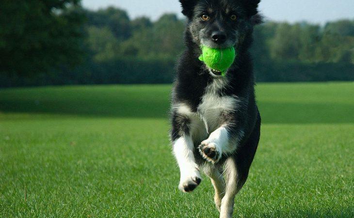 Hunderaser med høyt aktivitetsnivå Image
