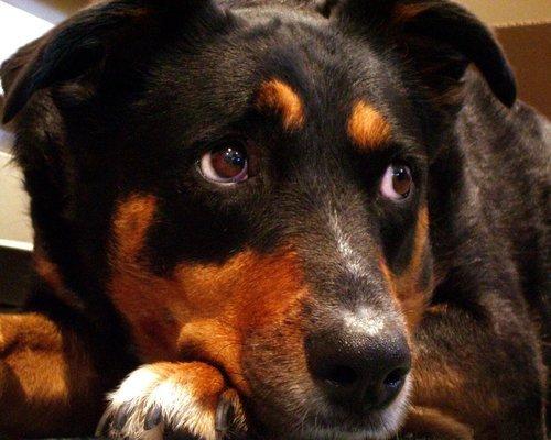 Forbered hunden på en ny hverdag Image
